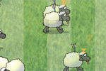 sheep-dash